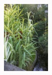 Terra Botanica 509.jpg