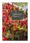 Terra Botanica 420.jpg